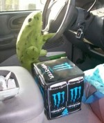 Driving Frog